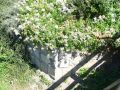 Tvrz : Chodov - zahradní úprava bývalého vodního příkopu - foto z 5. 8. 2007