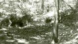 Hrádek : Karlík - pohled do lokality, kde stával hrádek - foto z r. 1990