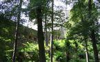Hrad : Buchlov - pohled z přístupové cesty - foto srpen 2006