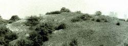 Hrad : Děvín - lokalita, kde stával hrad - foto z r. 1992
