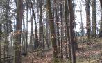 Zámek : Roztěž - pohled na zámek přes les od východu - foto z 29. 3. 2014
