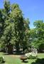 Zámek : Doudleby nad Orlicí - pohled do zámeckého parku - foto ze 4. 7. 2018 (převzato: Antonín Stára)